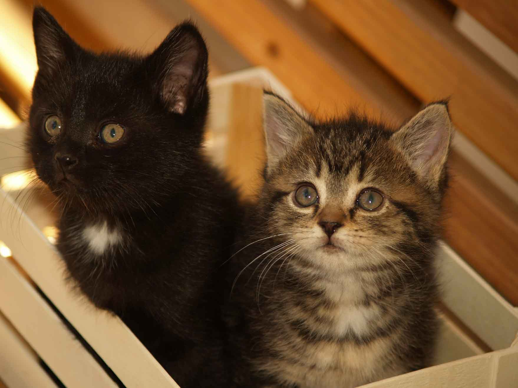 two kitties in a box